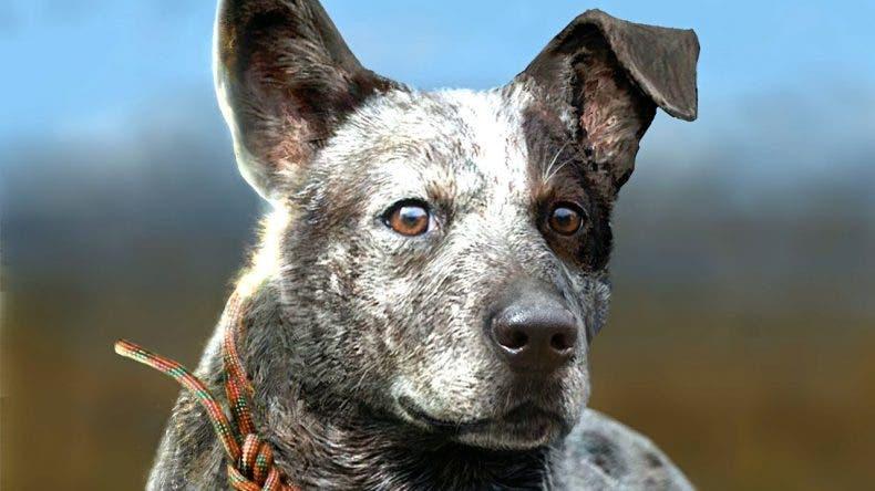 El perro de Far Cry 5, Boomer, será un compañero vital 1